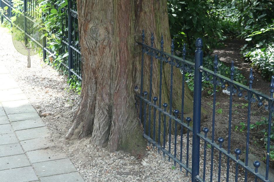 Bomen Op Erfgrens.Advies